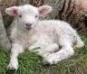 Lamb of God (Fowey Fellowship)